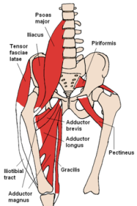 250px-Anterior_Hip_Muscles_2