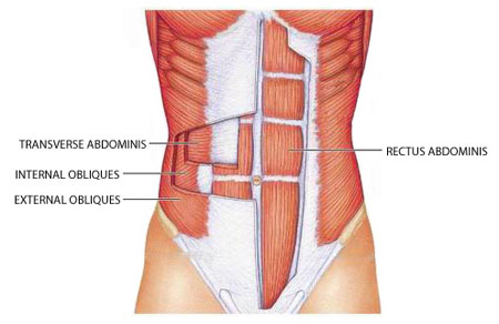 abdominal-muscles-diagram